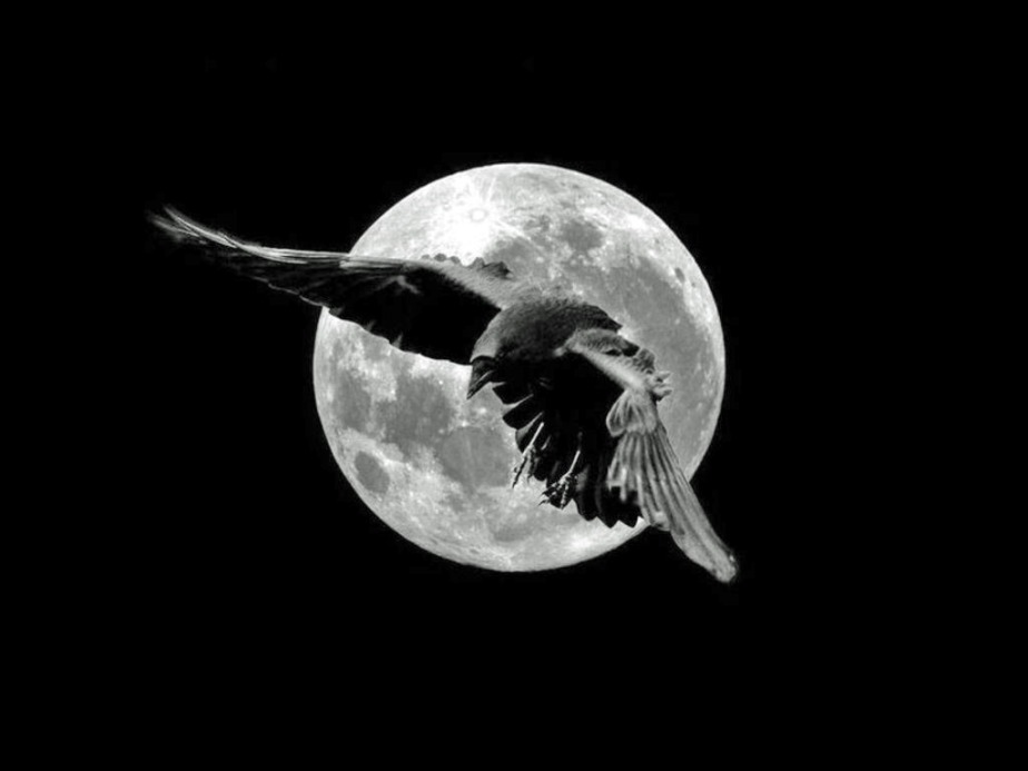 Raven's Flight (asestina)