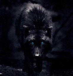 black wolf 3