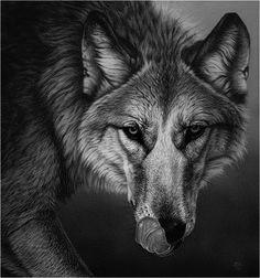 hungrywolf (2)